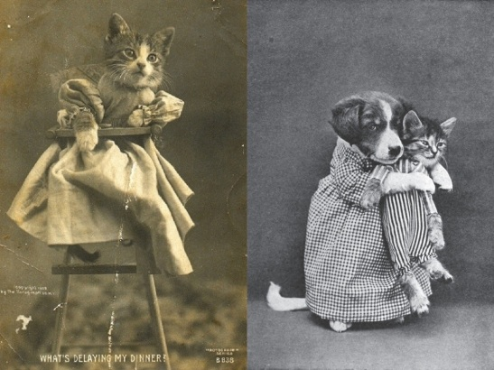 1800s lolcats in Scissors and Synths